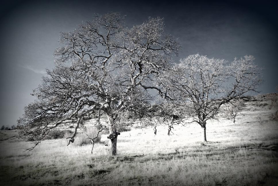 Upper Park Trees